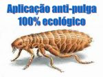 Dedetização contra pulgas e carrapatos!!!