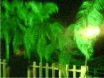 Iluminação Decorativa - Reino Selvagem