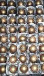 Truffa (Tamanho Médio Ferrero Rocher) - R$ 90,00 o cento na caixinha branca
