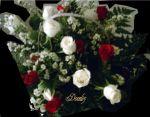 Cesta de Rosas 2 dúzias - Rosas vermelhas e brancas
